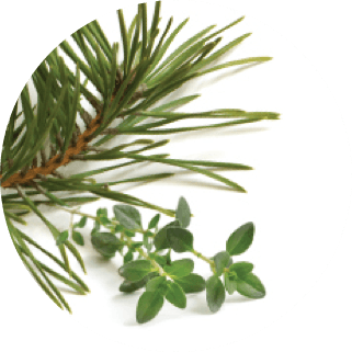 patented pine and thyme inspired complex ingredient برچین مارکت
